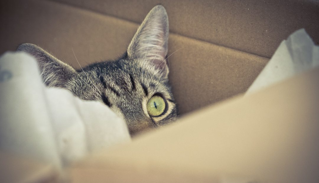 Checklist for moving with your pet