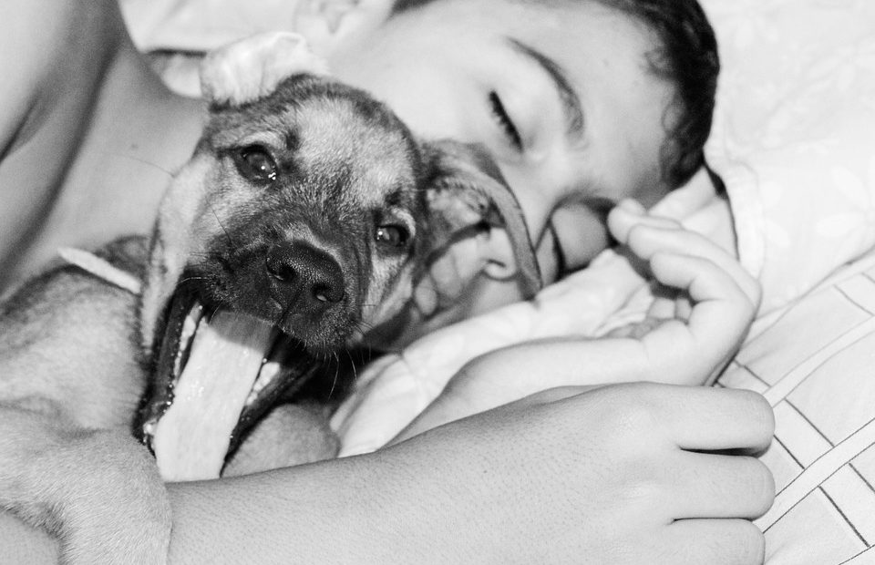 7 good reasons for sharing your bed with a dog
