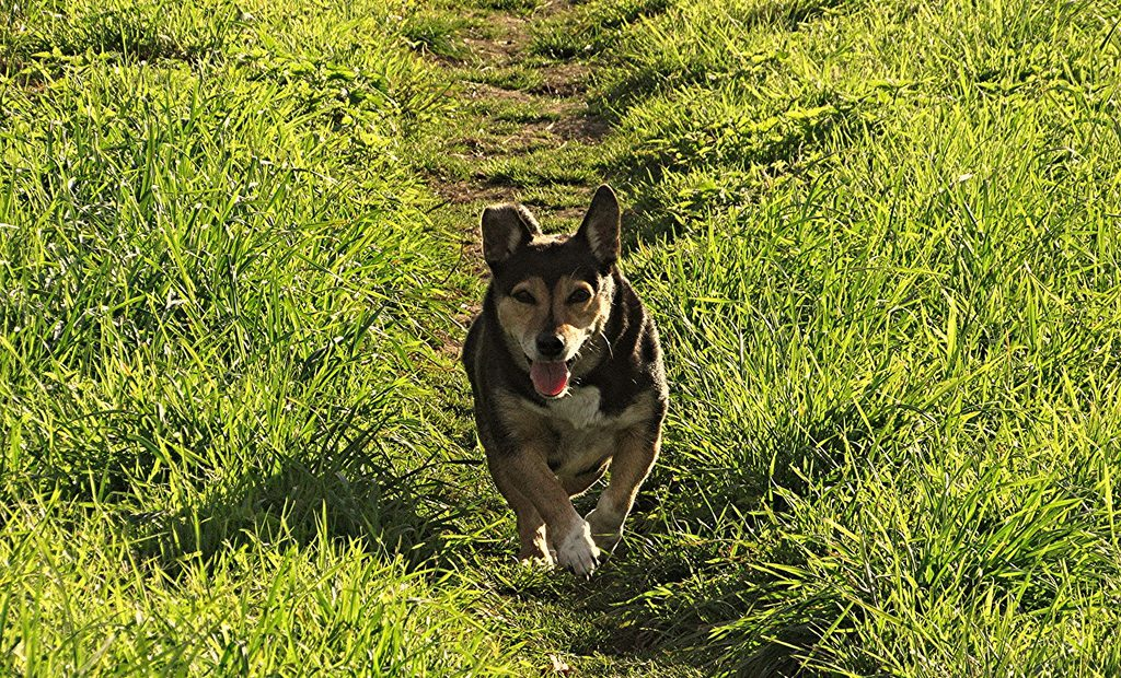 Our Dog Walking service lets the dogs out