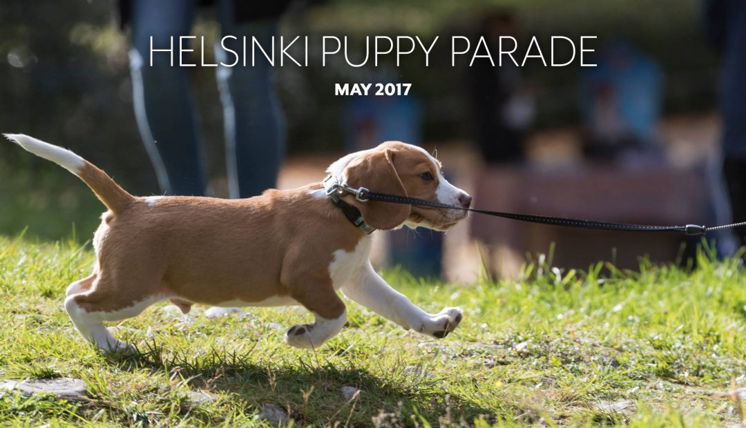 Interview with Jukka Mäenpää – one of the Helsinki Puppy Parade organizers